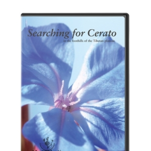 DVD searching cerato